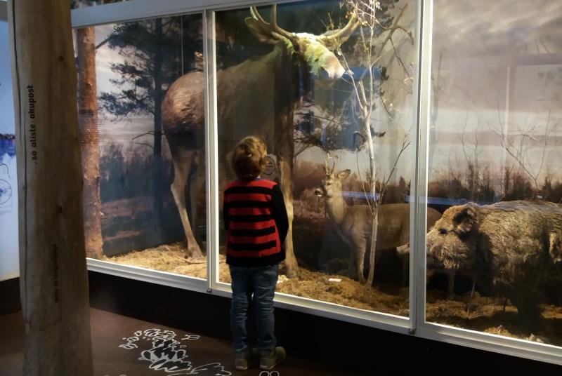 Viron luonnontieteellisen museon hirvidioraama